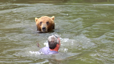 Man And Grizzly Bear Confrontation, Encounter In River