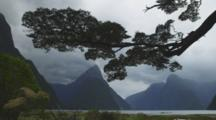 Milford Sound Silhouetted Beneath An Old Tree, Low Tide And Mountains Are Visible, Windy Conditions. Time Lapse Of Clouds Moving.