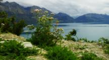 Yarrow Flowers Blooming In White Rocky Soil With Lake And Mountain Backdrop. South Island, New Zealand.