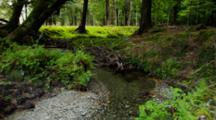 Stream Flowing Through Forest, Ferns And Undergrowth On Banks. Rocky Stream Bed. South Island, New Zealand.