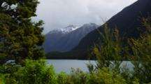 View Through The Shrubs Of Milford Sound, Light Changes From Golden To Dark On Shrubs.