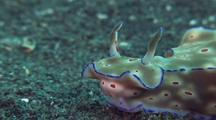 Nudibranch Traveling
