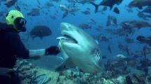 Bull Shark Takes Bait From Divemaster