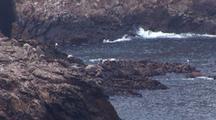 South East Farallon Island Sea Lion Rookery