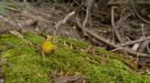 Banana Slug Slithers Across Forest Materials