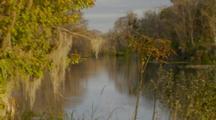 Safari Tour Boat, Beauty Of River, Cypress Trees