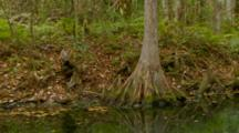 Monkey, Rhesus Macaque Mother Checking Habitat Along Edge Of River, Ultra Wide