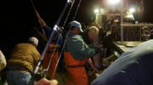 Humboldt Squid Fishing, Heavy Squid Action On Stern Of Ship