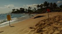 Wide, Monk Seal Resting On Sand Behind Sign, Bathers In Distance