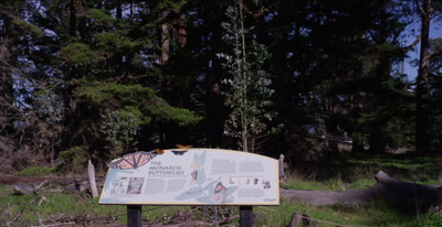 Monarch butterfly rests on park sign, habitat area