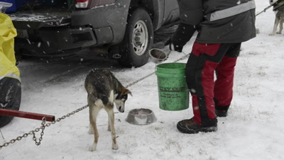 Dog Sled Racing Environment