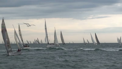 Sail boats on windy sea and seagulls flying