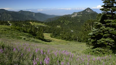 View of Northern Japan Alps and Mt. Kasagatake,wildflowers in foreground