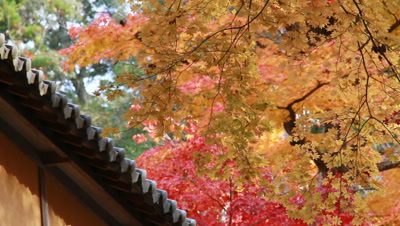 Japanese Garden and Fall Foliage