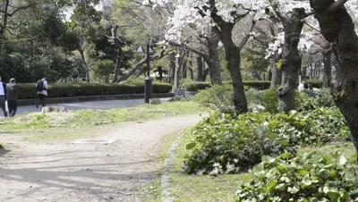 People Enjoy Hanami cherry blossom viewing at Hibiya Park,Tokyo