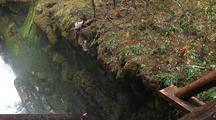 Footbridge Above Falls In Temperate Rainforest