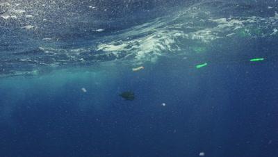 Blue Marlin swimming in open water
