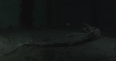 A Sailfish Carcass lies under a fishing dock