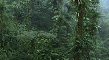 Jungle With Mist