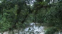 River With Vines And Jungle
