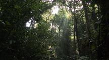 Jungle With Jesus Rays