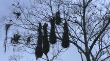 Large Hanging Bird Nests
