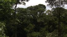 Travel Through Jungle Canopy