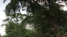 Travel Down Jungle River