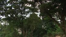 Travel Through Jungle