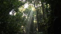 Edited Compilation Of Costa Rica Jungle Scenics