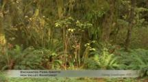 Edited Compilation, Very Slow Pan Of Temperate Rainforest Understory