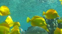 Edited Compilation Of Underwater Wildlife Of Hawaii