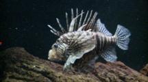 Edited Compilation Of Underwater Wildlife, Possibly In Aquarium