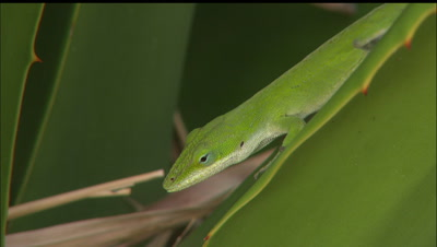 Reptile Stock Footage