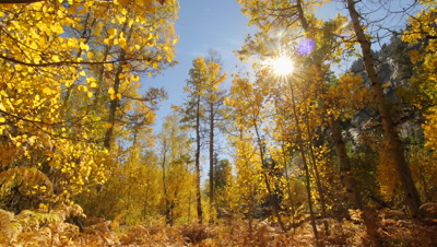 Golden Forest Paradise - 1 Hour Nature Relaxation - Video Decor