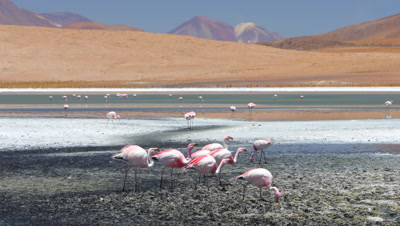 Wildlife Wonders of South America - 1 Hour Nature Relaxation - Video Décor