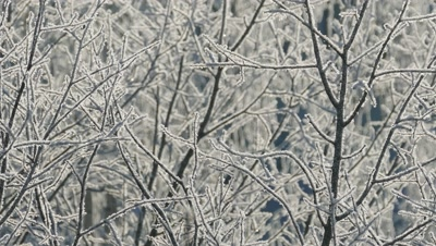 Branches of a tree covered with frost on a frosty day, background 4k