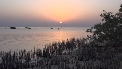 Time lapse sunrise over mangroves in Red Sea