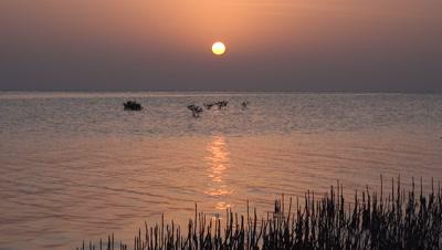 Sunrise over mangroves