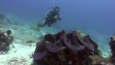 Diver looking at giant clam