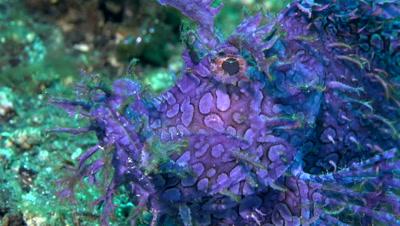 Diving in Bali - Video Decor Reel
