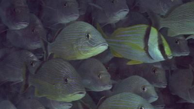 Diving Playa del Carmen - Video Decor Reel