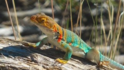 All Reptile Stock Footage