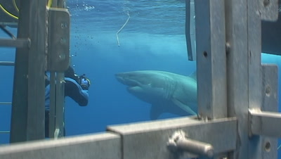 Shark Cage Stock Footage