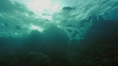coral reef in evening mood, last sunlight, fish moving, low angle shot
