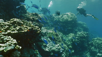 scuba divers exploring coral reef in the red sea