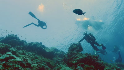 low angle underwater shot of scubadivers over coral reef