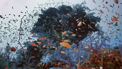 teaming coral reef landscape full of schooling fishes