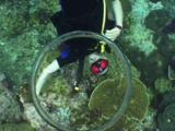 Scuba Diver Blows Bubble Rings Like Smoke Rings
