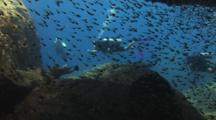 Scuba Divers Swim Past Underwater Cave With Shoal Of Swallowtail Cardinalfish, Rhabdamia Cypselura